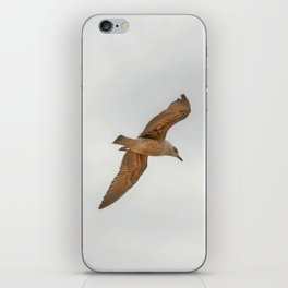 Seagull bird flying iPhone Skin