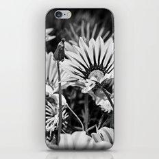 Desert Daisies (bnw) - Daisy Project in memory of Mackenzie iPhone Skin