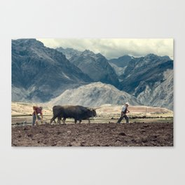 Sharecroppers plowing a field for potatoes, Maras, Urubamba Valley, Peru Canvas Print