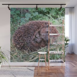 Erinaceidae,small hedgehog, wild living, sleeping in the grass Wall Mural