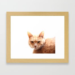 Red cat watching Framed Art Print
