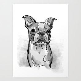 Black and White Boston Terrier Watercolor Art Print