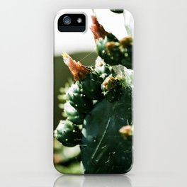 Cactus Flowering and Cobwebs  iPhone Case