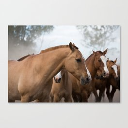 Estancia Horses Canvas Print