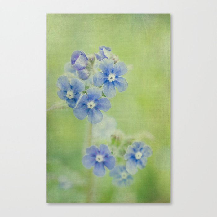 Comfrey Flowers Canvas Print