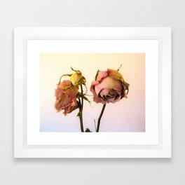 Old Rose Framed Art Print
