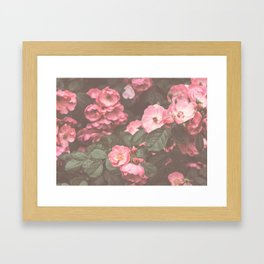 Pink Flowers in the Morning Framed Art Print