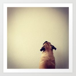 Pug staring up the wall Art Print