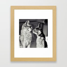 Cute cats who are curious about each other! Framed Art Print