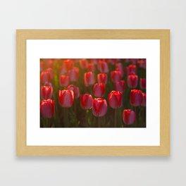Tulips spring Framed Art Print