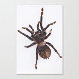 Tarantula Canvas Print