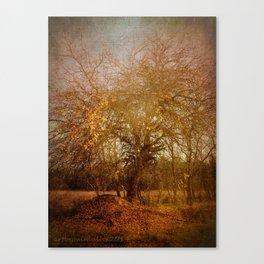 Golden November Canvas Print