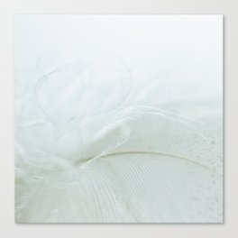 Feather in soft white Canvas Print