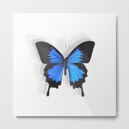 Botanical Bufferfly Metal Print