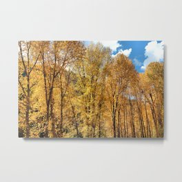 A Perfect Autumn Moment Metal Print