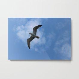 Shadow of a bird Metal Print