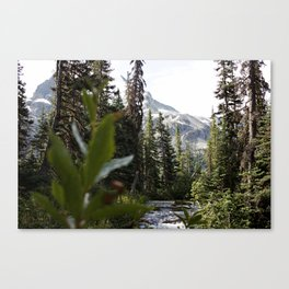 Into the Wild while in Whistler Canada Canvas Print