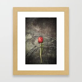 Tulip and barbed wire Framed Art Print