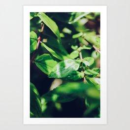 Rain Drops On Plants Art Print