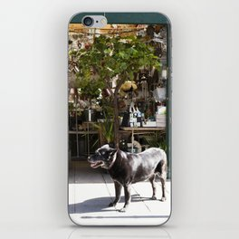 Dog in the Flower District, Paris - travel photography iPhone Skin