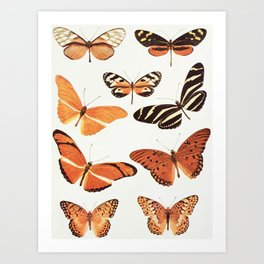 The Butterfly Book Collage II Art Print