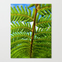 NZ 2 Canvas Print