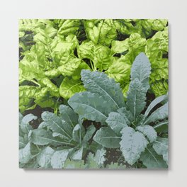 Healthy Lettuce Leaves Vector Illustration Metal Print