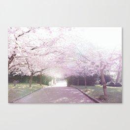 Cherry Blossom Sunday Canvas Print