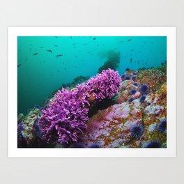 California Coral Art Print