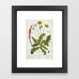 """Dandelion by Elizabeth Blackwell from """"A Curious Herbal,"""" 1737 (benefiting The Nature Conservancy) Framed Art Print"""