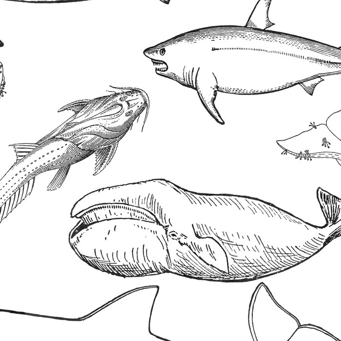The deep Sea- Whale-Shark,Fish- Ocean Animals Leggings