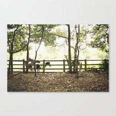 pony I Canvas Print