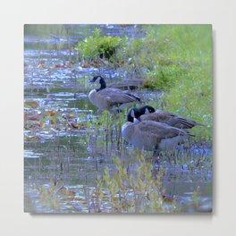 Geese in the Reeds Metal Print