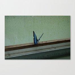 Captive Canvas Print