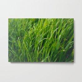 Blades of Grass Metal Print