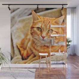 Cute red cat Wall Mural