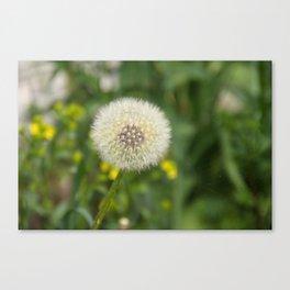Dandelion in a spider's web Canvas Print