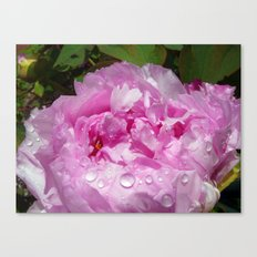 Pink Peony with Rain Drops Canvas Print