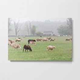 Sheep in the Foggy Countryside Metal Print
