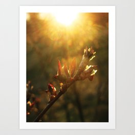 Sunset Leaf Art Print