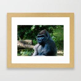 The Bronx Zoo Framed Art Print