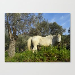 Speckled Roan Canvas Print