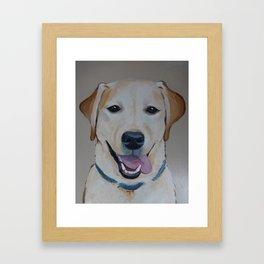 Smiling Lab Framed Art Print