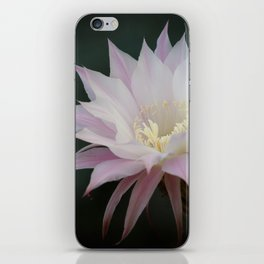 Beautiful Pale White Pink Echinopsis Oxygona Cactus Flower iPhone Skin