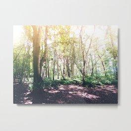Dappled Forest Metal Print