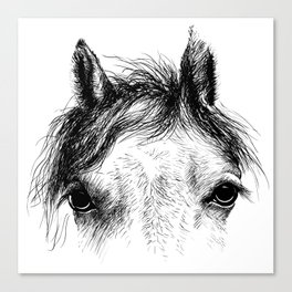 Horse animal head eyes ink drawing illustration. Mammal face portrait Canvas Print