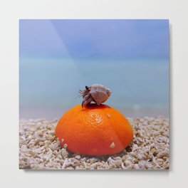 orange and hermit crab Metal Print