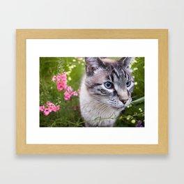 kitty in secret garden Framed Art Print