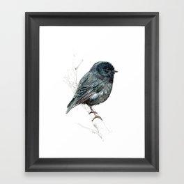 Black Robin Framed Art Print