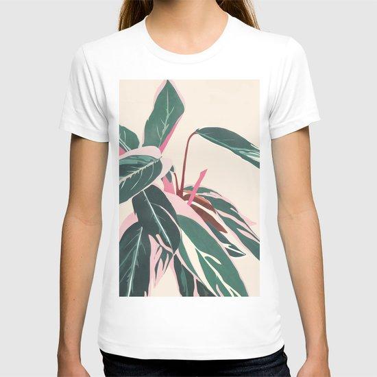 Stromanthe Sanquinea by cityart7